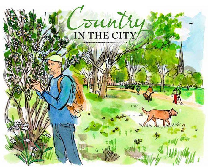 countryin thecity
