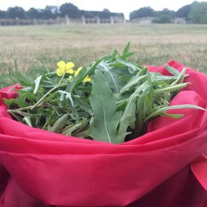 bundle of wild edible greens