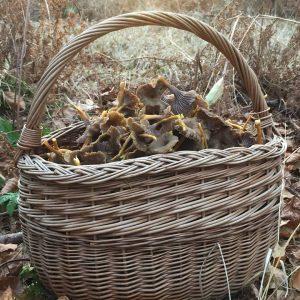 basket-full-winter-chanterelle