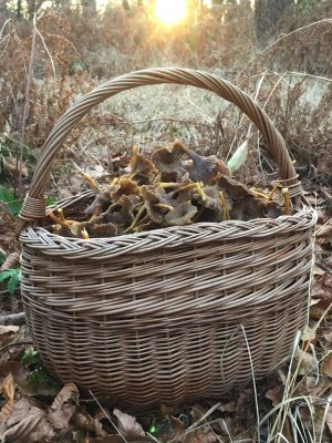 basket-full-winter-chanterelle